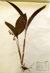 キミガゲサウ